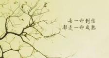 林徽因经典语录 林徽因有骨气的句子